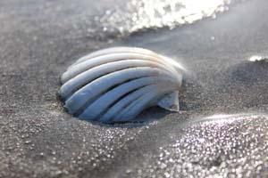貝殻の写真