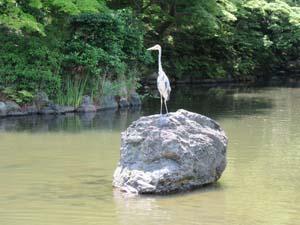 岩の上に立つ鳥