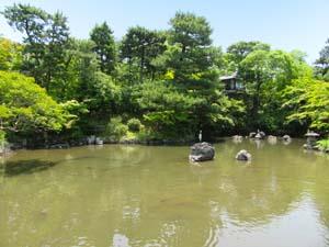 池と木の写真