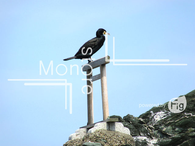 鳥居 - 形式 - Weblio辞書