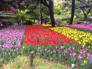 チューリップの花の写真