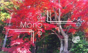 赤く染まる紅葉の木の写真