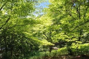 新緑が綺麗な山の写真