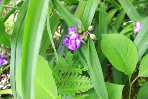 葉の間から見える小さな紫の花の写真