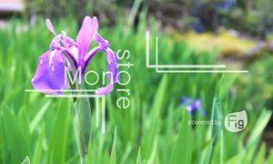 紫が綺麗な菖蒲の花の写真