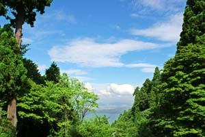 青い空と鮮やかな緑が映える木の写真