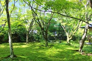 鮮やかな緑一面の木と地面の写真