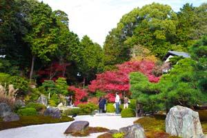 色鮮やかに赤く色づいた木の写真