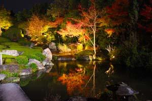 紅葉のライトアップの写真