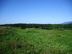 青い空と緑の草木の写真