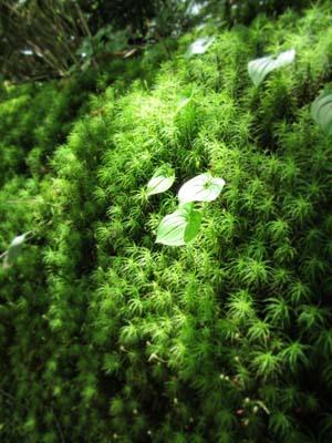 光の当たる緑の草の写真