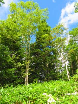 色鮮やかな草木と青空の写真