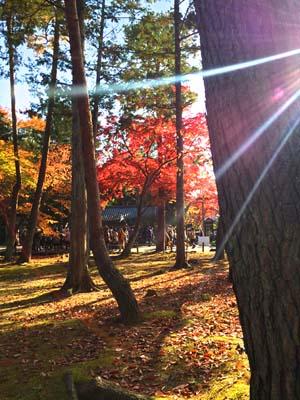 木々の間から射す光と紅葉の写真