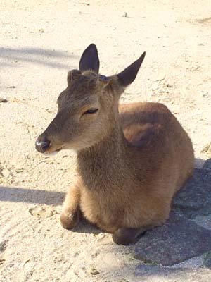 目を閉じて眠る鹿の写真