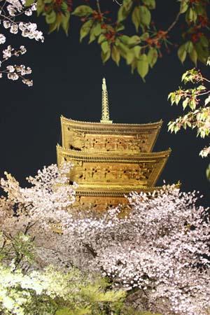 夜の五重の塔と桜の写真