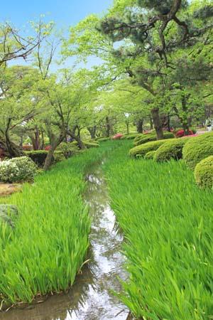 草木の間に流れる1本の川の写真