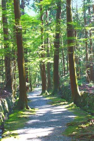 木々の間の一本道の写真