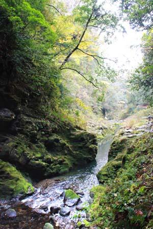 山の中を流れる川の写真