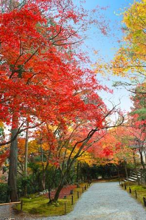 赤と黄色に染まった紅葉の写真