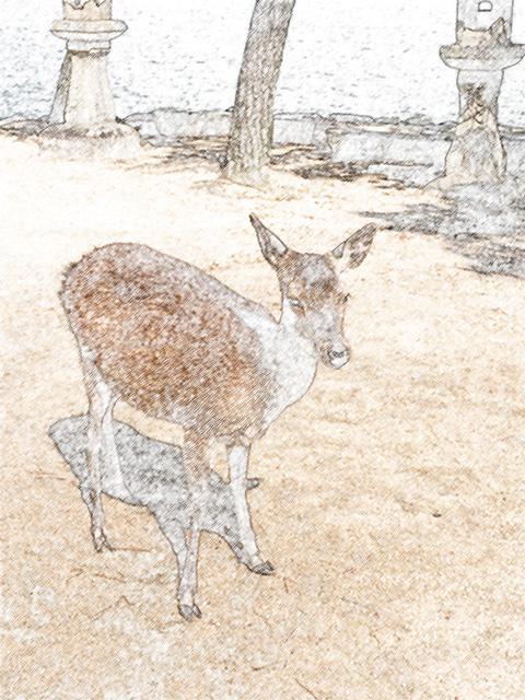 colorsheet 宮島に生息する鹿のぬり絵20007完成イメージ