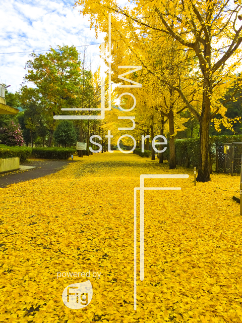 Photo of the carpet of Ginkgo and Ginkgo trees