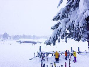 斑尾高原スキー場に降り続ける雪の写真[Photo10232]