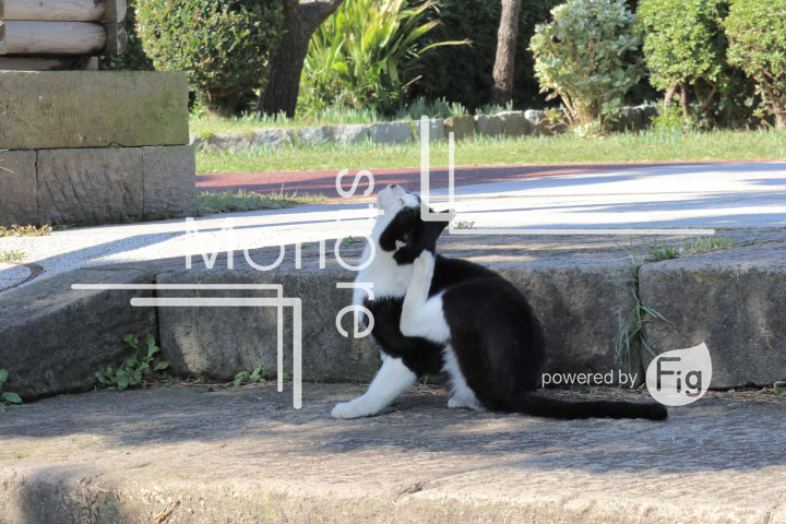 cats_photography2043