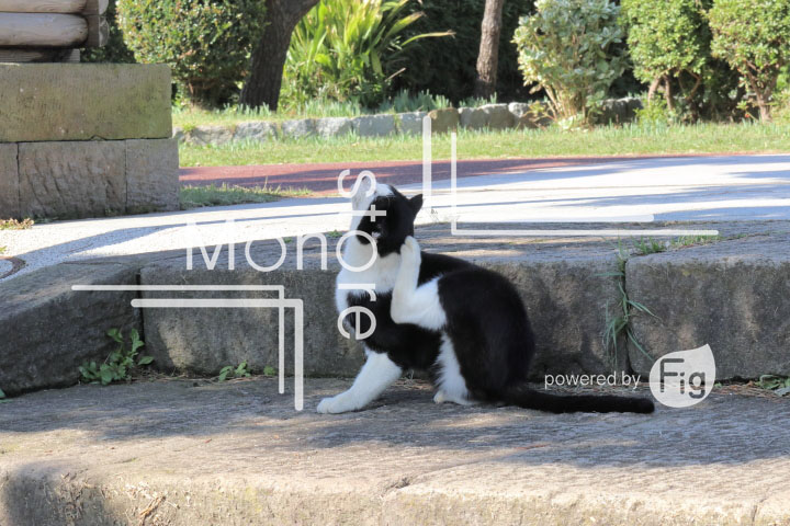 cats_photography2045