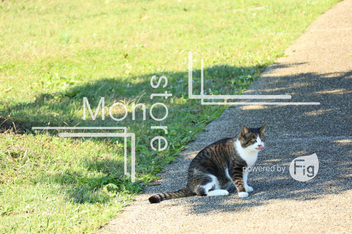 cats_photography2411