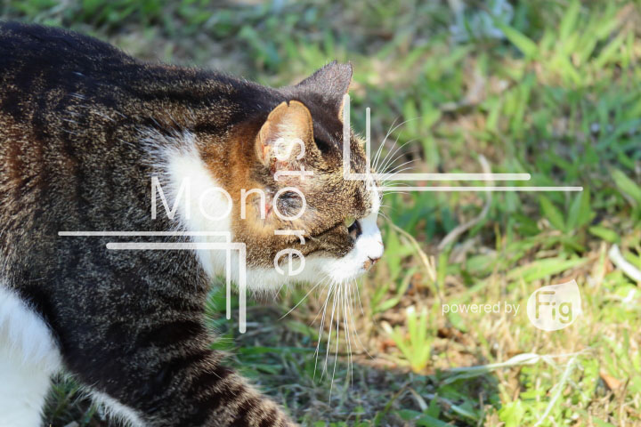 cats_photography2432