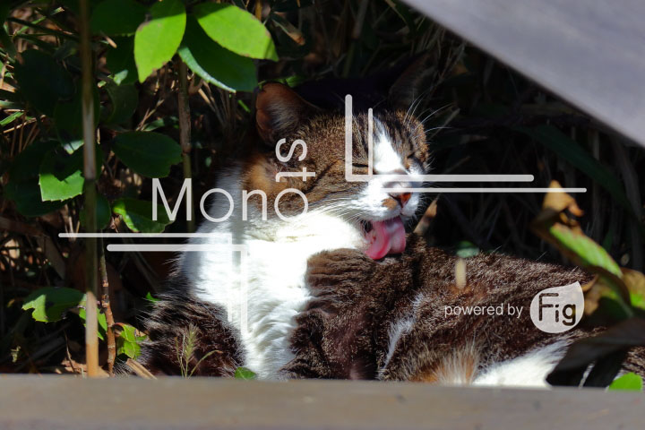 cats_photography2488