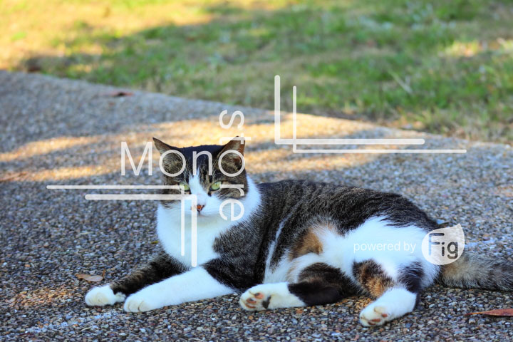 cats_photography2613
