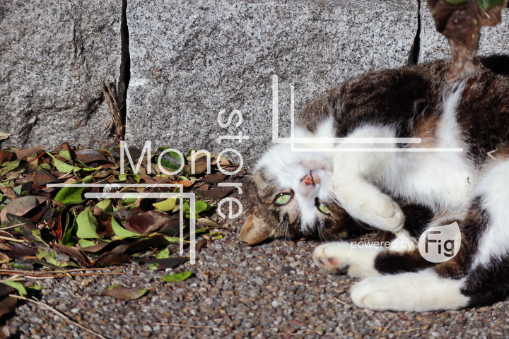 cats_photography2633