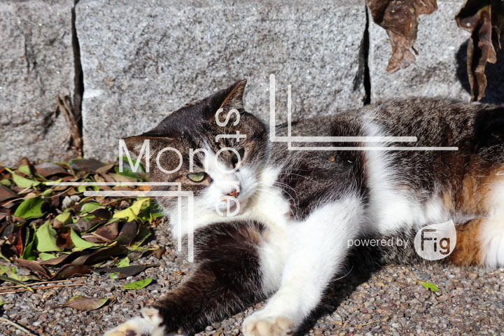 cats_photography2638