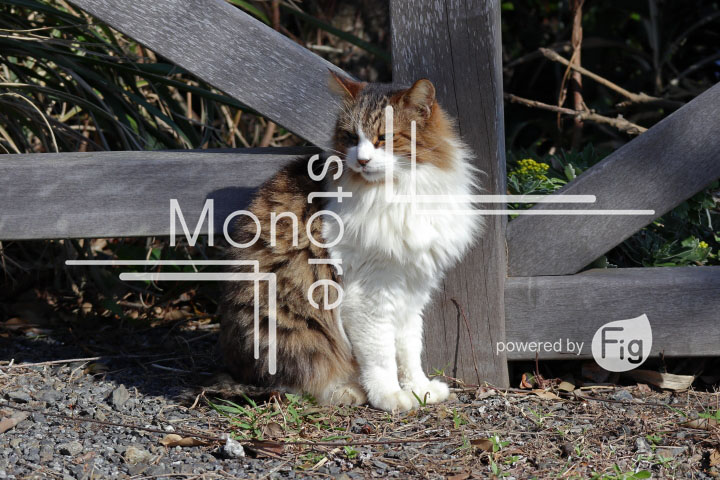 cats_photography2702