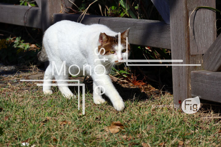 cats_photography2721