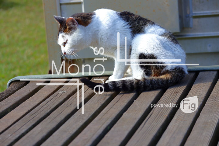 cats_photography2800