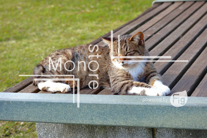 cats_photography2829