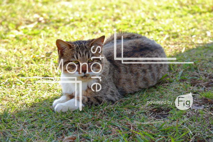 cats_photography2887