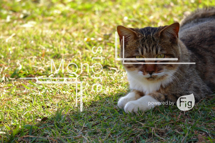 cats_photography2901