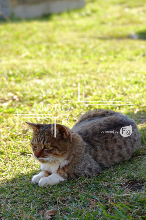 cats_photography2926