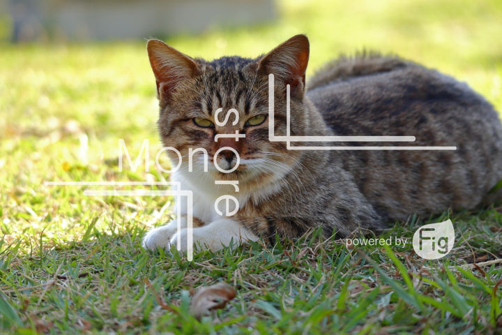 cats_photography2934