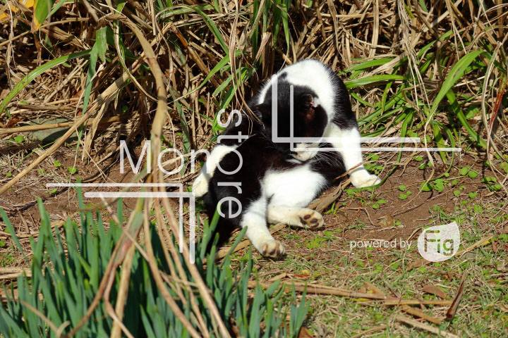 cats_photography2964