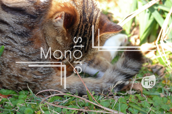 cats_photography2989