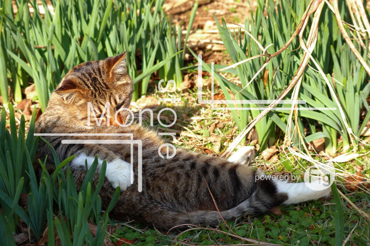 cats_photography2997