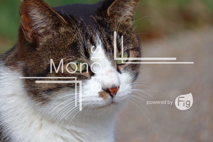 cats_photography3059