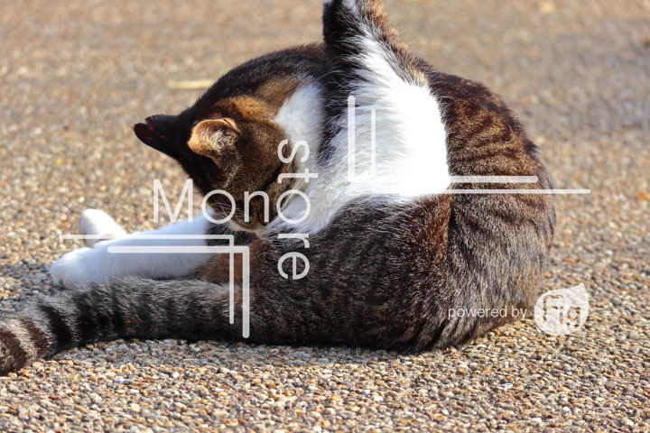 cats_photography3151