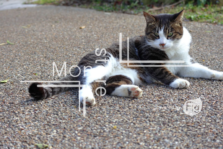 cats_photography3163