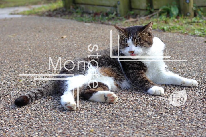 cats_photography3171