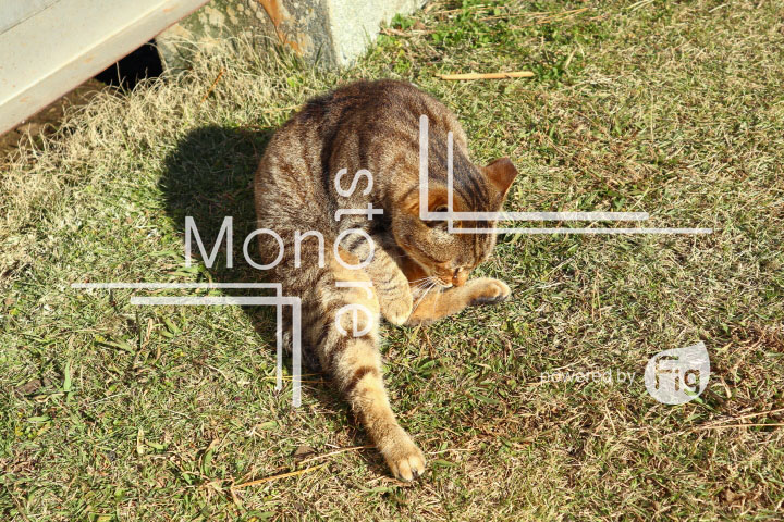 cats_photography3761